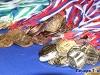 Чемпионат и первенство РК - Ухта-2020