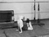 «Физкультпривет». Из архива М.А. Бабичева