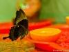 Выставка в ПИКМ «Живые тропические бабочки»
