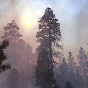 Пожар в Печорском районе полностью ликвидирован