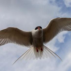 Птичьи истории