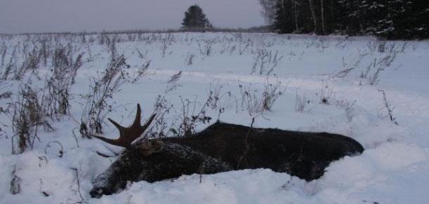Судебные приставы отдела судебных приставов по г. Печоре взыскали с браконьера материальный ущерб за незаконную охоту
