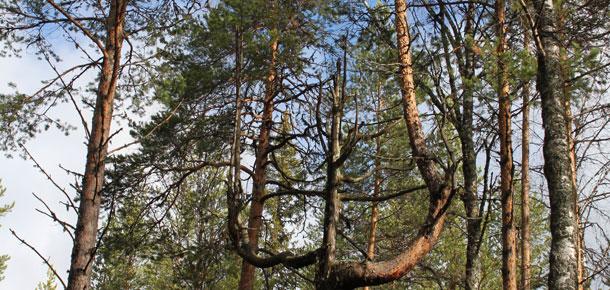 Печорская природоохранная межрайонная прокуратура провела проверку соблюдения исполнения законодательства