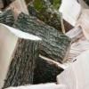 Заместитель печорского природоохранного межрайонного прокурора утвердил обвинительное заключение по уголовному делу в отношении троих местных жителей