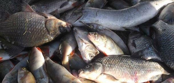 Состоялось экспертное совещание по вопросу сохранения рыбных ресурсов реки Печоры