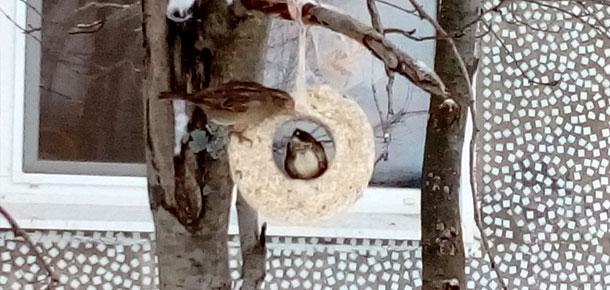 Покормили птиц зимой