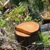 В г. Печоре расследуется уголовное дело по факту незаконной рубки лесных насаждений
