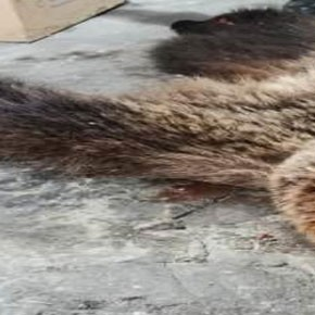 Убил медведя