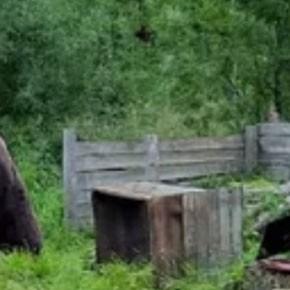Медведей отстрелят
